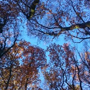 Photo du ciel et des bois